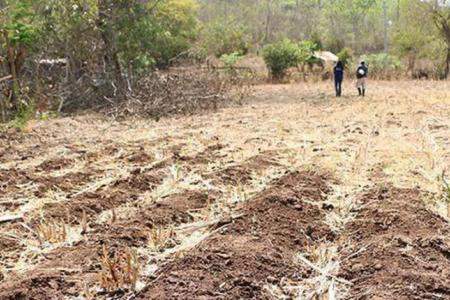 Poor crop yields in El Salvador
